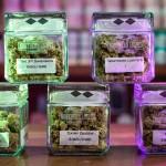 Northern Lights Cannabis Jars