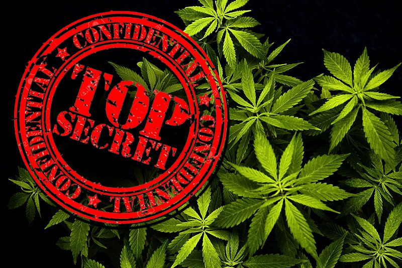 5 Things Your Marijuana Marketing Agency Does Not Want You To Know