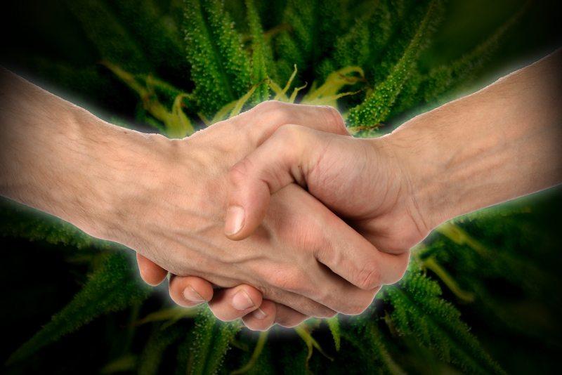 Handshake with Cannabis