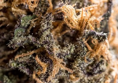 Digital 303 Cannabis Photos & cannabis videos: Magnified Close Up Marijuana Bud