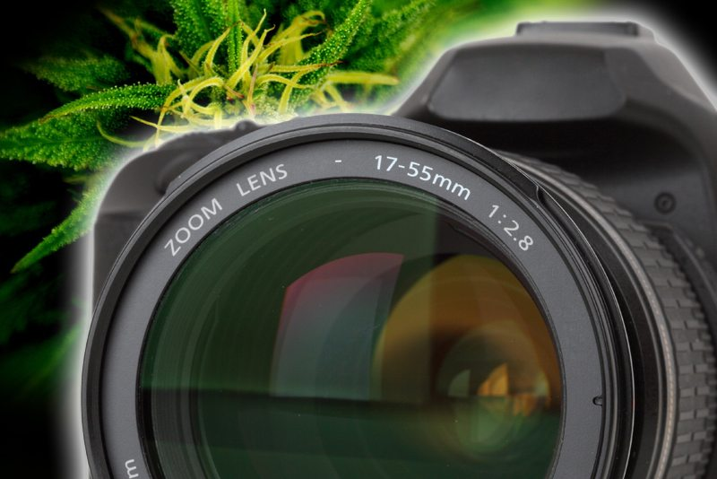 Why Your Cannabis Business Needs Photography and Video